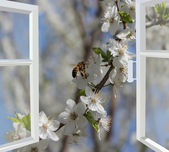 Opened window to the garden with blossoming cherry-tree — Stock Photo