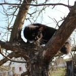 Black cat climbing up the tree — Stock Photo #30972533