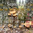 Stock Photo: Calendar for September of 2014 on background of mushrooms