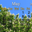 Calendar for May of 2014 with crowns of chestnut — Stock Photo