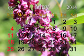 Calendar for May of 2014 year with lilac flower — Stock Photo