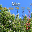 Stock Photo: Calendar for May of 2014 with crowns of chestnut