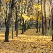 Stock Photo: Autumn park with trees and leaves