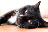 Black cat lying on the floor — Stock Photo