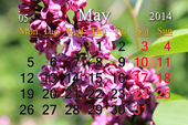 Calendar for May of 2014 year with lilac — Stock Photo