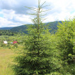 Green young fur-tree on the hill — Foto de stock #35592439