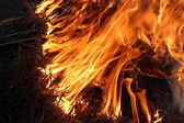 森林火灾 — 图库照片