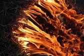Ormanda yangın — Stok fotoğraf