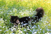 Black cat with white tie in the bush — Stock Photo
