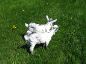 Goat kids on the pasture — Stockfoto