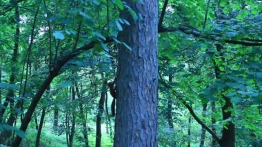 Two squirrels pursuing each other on the tree — Vídeo Stock