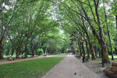 People have a rest in park with greater trees — Stock Photo