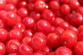 Friuts of red berries of Prunus tomentosa — Stock Photo