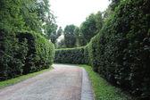 Hermoso parque con paseo agradable sendero y verdes arbustos — Foto de Stock