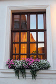 Window with hanging flowers — Stock Photo