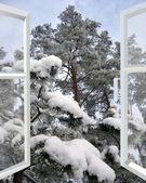 Open window to snowy winter forest — Foto Stock