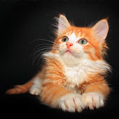 Cute orange kitty — Stock Photo