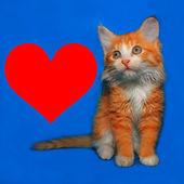 Cute orange kitty with heart — Stock Photo
