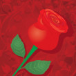 Vector red rose flower background. — Stock Vector