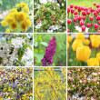 A collection of nine pictures of flowers blossoming in spring — Stock Photo