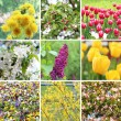 A collection of nine pictures of flowers blossoming in spring — Stock Photo #14051640