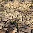 Cracked earth with grass - Stock Photo