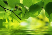 Nature scene in Summer: green leaves reflecting in water with some copy space — Stock Photo