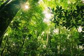 Braziliaanse regenwoud — Stockfoto