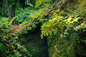植物园 — 图库照片