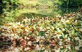Plantas tropicales — Foto de Stock