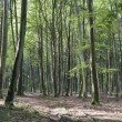 Stock Photo: Forest of Longpont (Picardie)