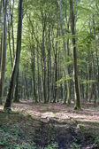 Forest of Longpont (Picardie) — Stock Photo