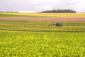 Agriculture in France — Stock Photo