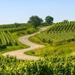 Winding road in the vineyards of Alsace - Foto Stock