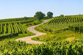 Winding road in the vineyards of Alsace — Stock Photo