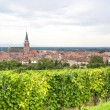 Bergheim (Alsace) - Panorama with vineyard — Foto Stock