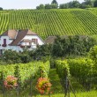 Hunawihr (Alsace) - House and vineyard — Stock Photo #15563693