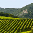 Hunawihr (Alsace) - Castle and vineyard — Stock Photo #15563713