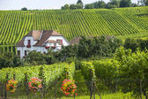 Hunawihr (Alsace) - House and vineyard — Stock Photo
