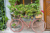 Bergheim (Alsace) - Bicycle and flowers — Stock Photo