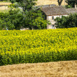 Marches (Italy) - Farm - Stock Photo