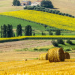 Marches (Italy) - Farm — Stock Photo