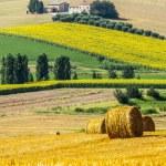 Marches (Italy) - Farm — Stock Photo