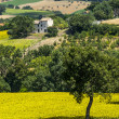 Marches (Italy), landscape — Stock Photo