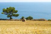 Conero - Cultivated coast — Stock Photo
