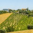 Marches (Italy), Landscape - Stock Photo