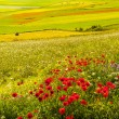 Stock Photo: Landscape of Piano di Castelluccio