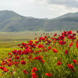 Landscape of Piano di Castelluccio — Stock Photo