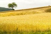Sella di Corno (Abruzzi) - Landscape — Stockfoto