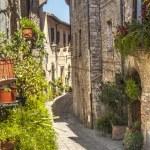 Spello (Umbria) — Stock Photo #22580653